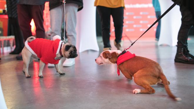 Humanost na delu – napušteni psi pronašli novi dom